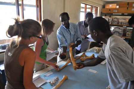 Alisha, Kasia, Luke and Johnpius listen as Dr. Anyonge shows how forearm morphology differs among ungulates and primates.